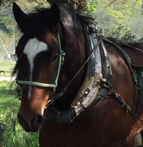 馬には乗ってみよ
